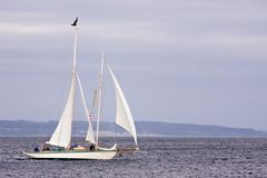 Sailboat. Singular Sailboat sailing the Puget Sound stock image