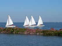 Sailboat. Lake balaton royalty free stock photo