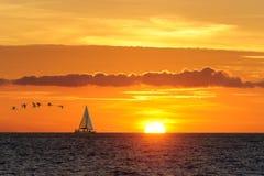 Sailboat Birds Stock Images