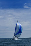 Sailboat with Blue Spinnaker Sail Stock Photography