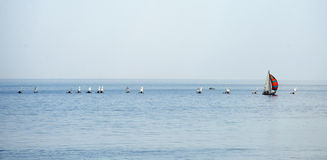 Sailboat group regatta race on sea Stock Images