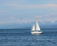 Sailboat In The Bay Royalty Free Stock Images