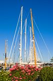 Sailboat masts and flowers. A view of the masts of tall sailboats docked at a popular marina in Newport, Rhode Island, with bushes and flowers in the foreground stock photo