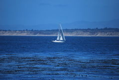 Sailboat in the Monterey Bay Royalty Free Stock Image
