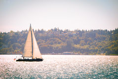 Sailboat on the open water. Sailboat sailing on the open water with trees in the background Stock Photo