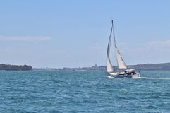 Sailboat on the Parramatta River Royalty Free Stock Image