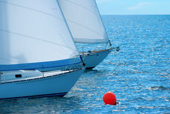 Sailboat race Royalty Free Stock Photo