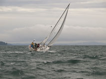 Sailboat Race in a Winter Storm Royalty Free Stock Photo