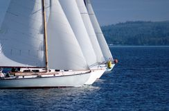 Sailboat races. Four sailboats nose to nose in a sailboat race in Port Townsend stock images