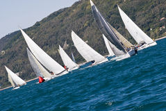 Sailboat Racing. Sailboat race with multiple boats and hills in the background in a sunny day - strong wind during Barcolana regatta - (Trieste, Italy 2007 Royalty Free Stock Photos