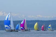 Sailboat Racing on Puget Sound, Seattle, Washington State. Salinig Races in the Pacific Northwest USA Royalty Free Stock Image