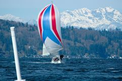 Sailboat Racing on Puget Sound. Single boat coming into leeward marke under spinnaker with Olympic Mountains in background Stock Photos