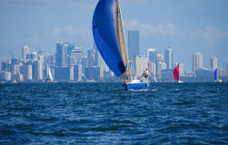 Sailing regatta sailboat race w Miami Florida skyline Royalty Free Stock Photography