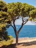 Sailboat, Rovinj, Croatia Royalty Free Stock Photography
