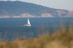 Sailboat sails near Northern California coast with grass in the foreground. On a sunny day Stock Photos