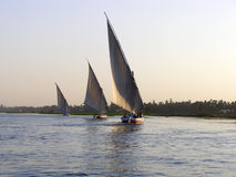 Sailboat at sunset. Sailfish vessel on blue water of Nile river, Egypt Stock Photos