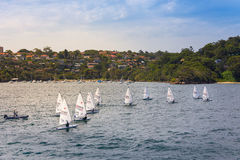 Sailboat in Sydney Harbor Royalty Free Stock Images