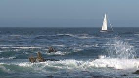 Sailboat Westcoast, California, United States stock video