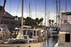 Sailboat and Luxury Yacht Ocean Harbor Marina Royalty Free Stock Photography