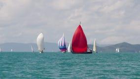 Sailboats με τους ζωηρόχρωμους ιστούς απόθεμα βίντεο