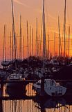Sailboats. In sunset royalty free stock images