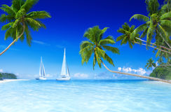 Sailboats Beach Palm Tree Summer Vacation Concept Stock Photography