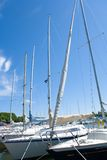 Sailboats in Dock Stock Image