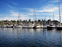 Sailboats Docked in Marina Royalty Free Stock Image