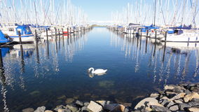 Sailboats in harbor Stock Photography