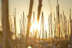 Sailboats in harbor at sunset