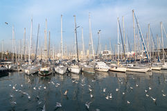 Sailboats Moored In Port Vell, Barcelona Stock Image