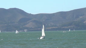 Sailboats near San Francisco stock video
