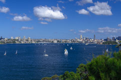 Sailboats at Port Jackson near Rose Bay royalty free stock images