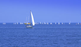 Sailboats regatta Royalty Free Stock Photography