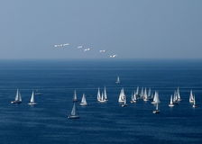 Sailboats and seagulls. Flock of seagulls flying over a group of sailboats on blue sea Royalty Free Stock Image