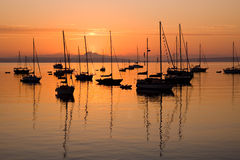 Sailboats at sunrise in Port Townsend Bay. Many silhouetted sail boats anchored in Port Townsend Bay during sunrise Stock Images
