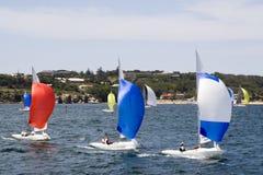 Sailboats in Sydney Harbor Royalty Free Stock Photo