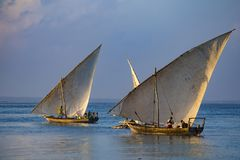 Sailboats on the water surface. Zanzibar island , Tanzania, Africa. 13.02.2019 Ancient wooden sailing boats with people on board on the sea surface at the royalty free stock photo