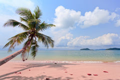 Sailer on beach Royalty Free Stock Image