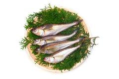 Sailfin sandfish Stock Images