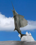 sailfish Royaltyfri Foto