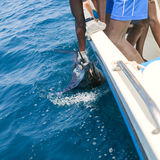 Sailfish catch billfish sportfishing holding bill Royalty Free Stock Images