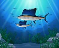 Sailfish dopłynięcie Pod wodą royalty ilustracja