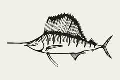 sailfish Gebissen in den Kapazitäten Zeichnung Stock Abbildung