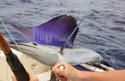 Sailfish. On the hook rod Stock Photo