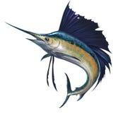 Sailfish no fundo ilustração stock