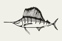 sailfish Pescados de mar Gráfico Imagenes de archivo