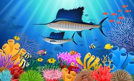 Sailfish Swimming Under Water Stock Image
