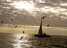 Sailing. On the ocean at sunset with birds royalty free stock images