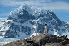 Antarctica Gentoo penguins stand jagged snowy mountains royalty free stock photography